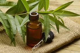 tea-tree-essential-oil