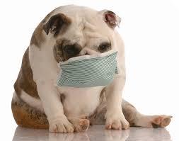 bulldog-with-mask